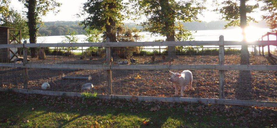Camping Ille et Vilaine avec mini-ferme